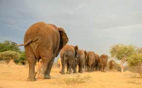 코끼리 15마리 자유롭게 노니는 남아공 이색 리조트