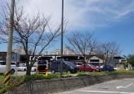 간판 가린다고 30년 된 왕벚나무에 드릴 구멍 10개 뚫은 식당