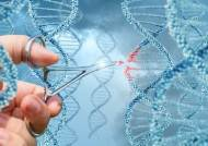유전자 가위, 자르지 않고 '덮어씌워' 교정하는 신기술 개발