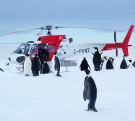 [<!HS>유규철의<!HE> <!HS>남극일기<!HE>] <!HS>남극<!HE> 먹이사슬의 뿌리, 크릴 새우 80%가 사라졌다