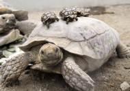 보아뱀·육지거북…국제 멸종위기종 키운 동물카페 운영자