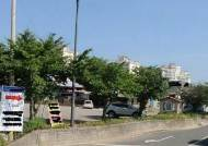 간판 가린다고 나무에 드릴로 구멍…30년 왕벚나무 고사시킨 음식점주