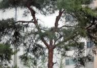 """공원 그늘서 쉬는데 467㎏ 나뭇가지가 떨어졌다면?…""""국가 배상"""""""