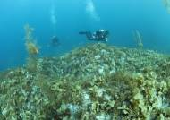 수중생물의 보고 울진 '왕돌초'…국가핵심 바다숲으로 관리