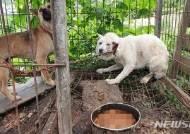 농장에 방치돼 음식물쓰레기 먹던 개들 14마리 구조
