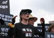복날 킴 베이싱어는 국회서 시위하지만, '개 도살 금지' 법안은 여론 눈치만