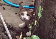 머리에 못 박힌 고양이 발견돼…경계심 심해 구조 난항