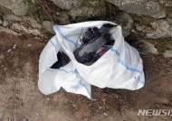 광주서 비둘기 떼죽음…살충제 성분 검출돼 수사 의뢰