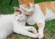 고양이 밟고 패대기친 악몽의 밤···경의선 숲길 '자두의 비극'