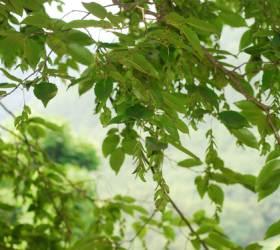 미세먼지 손상 피부 회복력 10배... 핵심 '항산화물질' 나무에서 뽑아냈다