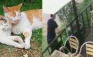 남의 고양이 '자두' 학대한 뒤 살해한 30대 남성 체포