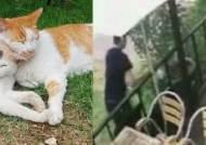 '경의선 숲길' 고양이 학대한 뒤 살해한 30대 남성 체포