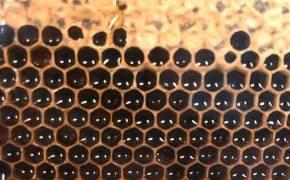불타는 노트르담서도 생존…꿀벌 없인 인류 4년내 멸종