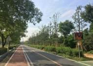 한강공원에 대나무ㆍ미루나무 심은 '한강숲' 조성