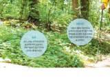 [건강한 가족] 피톤치드·음이온 가득한 숲, 면역력·심혈관 강화하는 '그린 닥터'