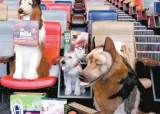 [라이프 트렌드] 강아지 인형과 영화 보고, 사진 찍고