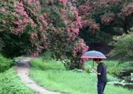 28일까지 곳곳에 비…시간당 30㎜ 폭우 내리는 곳도