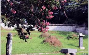 [조용철의 마음 풍경] 눈물 뚝뚝 백일홍 배롱나무