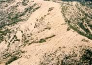 """[강찬수의 에코파일] """"산림녹화 세계적 성공사례""""…국민 1인당 249만원 혜택"""