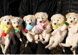 '김정은 선물' 풍산개 낳은 새끼 두 마리, 대전 간다