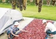 [사진] 옥수수·고추 말리기