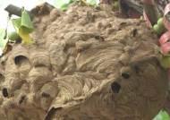 성묘하다 말벌집 건드릴라… 가을산행 뱀·독버섯·쐐기풀도 조심