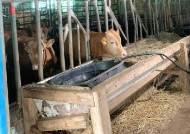 제주 소·돼지 축사 10곳 중 7곳 무허가…한림정수장 폐쇄 위기