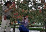 한알 1만1000원…마트 사과 비결은