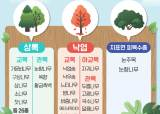 1인1나무에 미세먼지 1785t 줄어…'공기청정' 소나무·잣나무 가격 얼마?