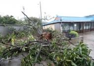 태풍 링링에…창고 손보러 나갔다 강풍에 날아간 70대 사망