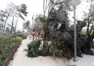 태풍 링링 강풍···무너진 담벼락에 깔린 30대 버스기사 참변