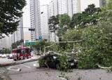 뿌리채 뽑힌 나무, 물 잠긴 도로···'링링' 할퀸 北 사진보니