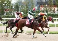 1초에 1000만원…경마 A매치서 한국말 연속 우승