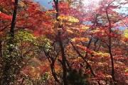 올 가을 설악산 단풍…시작은 28일, 절정은 다음 달 18일