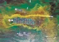 [사진] 빨갛게 변한 바다 … 남해안에 적조