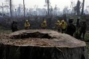 [서소문사진관] '지구의 허파'가 타고 있다