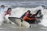 [서소문사진관] 긴박했던 범고래 구출작전, 7마리 중 1마리는 잃었다