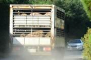 [속보] 경기도 파주 농장 2곳서 아프리카돼지열병 의심신고