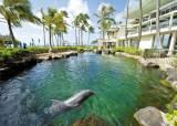 [Wedding&] 다이아몬드 헤드, 해변의 돌고래도 감상 … 잊지 못할 '로맨틱 허니문' 하와이로 오세요