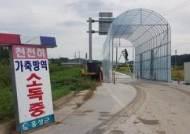 """""""노인 병원 못가도 돼지가 중요"""" 85만마리 홍성농가, 버스 중단"""