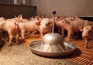 경기 양주 또 돼지열병 의심 신고…확진 땐 10번째 발병