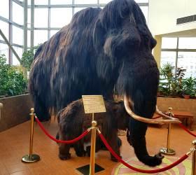 [<!HS>김종덕의<!HE> <!HS>북극비사<!HE>] 4000년 전 멸종 매머드 찾는 사냥꾼만 500명이 넘는 나라