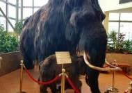[김종덕의 북극비사] 4000년 전 멸종 매머드 찾는 사냥꾼만 500명이 넘는 나라