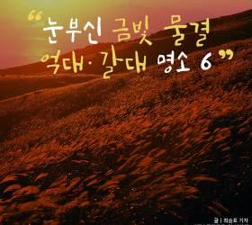 [<!HS>카드뉴스<!HE>] 눈부신 금빛 물결, 억대·갈대 명소 6