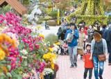 [출범 70주년 <!HS>도약하는<!HE> 대전] 꽃, 빛, 온천 테마로 더 풍성해진 '국화 전시회'에서 가을을 만나요