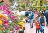[출범 70주년 도약하는 대전] 꽃, 빛, 온천 테마로 더 풍성해진 '국화 전시회'에서 가을을 만나요