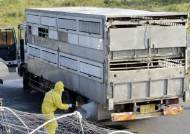 2100두 사육 중인 파주 농가서 돼지열병 의심신고