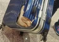 """[숫자로 보는 여행가방 파손] """"어 가방이 깨졌네""""...항공기 수하물 파손, 3년새 19% 급증"""