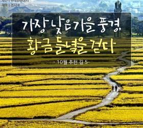 [<!HS>카드뉴스<!HE>] 황금 들녘 눈부신 10월 추천 길 4