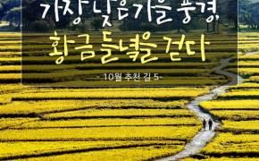 [카드뉴스] 황금 들녘 눈부신 10월 추천 길 4